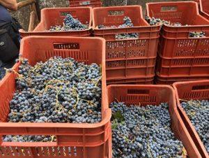 シチリアワイン作りに密着